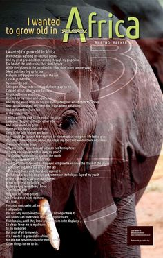 """Poem ©: """"I Wanted to Grow Old in Africa"""" - by Cyndi Barker."""