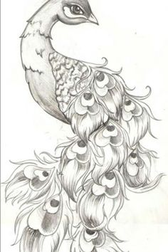Peacock tattoo sketch this is really awesome Tattoo Drawings, Cool Drawings, Drawing Sketches, Drawing Ideas, Drawing Tips, Sketching, Sketch Tattoo, Pretty Drawings, Beautiful Drawings