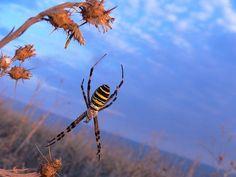 """""""Spider"""" - Anna Podekova"""
