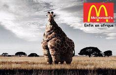 Macdonal afrique girafe
