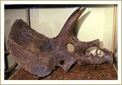 South Dakota's state fossil is the triceratops.