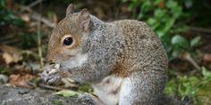 Squirrel Appreciation Day January 21, 2014