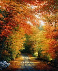 Automobiles...leaf peeking drives in New England. I love autumn.  #smirnoffsorbet