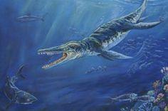 Farmer Finds Enormous Prehistoric Sea Monster Jaw Kronosaurus queenslandicus