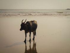 Goa Goa, Moose Art, Animals, Hippie, Indian, Animales, Animaux, Orphan, Animal