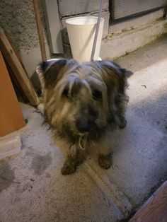 Found this little guy on 29th January at Lawrence's Hill, Ballyfermot, Dublin. He has got a black collar on and is sore in the right eye. He got matted fur, very friendly and just wanted cuddles. He also partially blind.