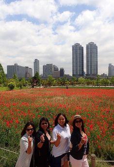 A Little Bit of K-Drama in a Field of Poppies