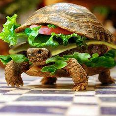 Der Turtle Burger