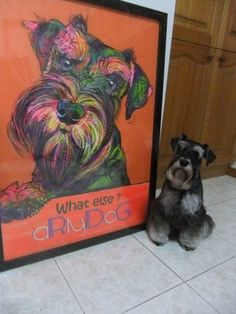 Grace from Jazz's second litter. And a painting of her.