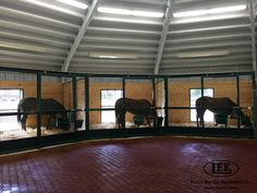 Lucas Equine stalls featuring a circular design with crosshatch top and bottom. Horse Stalls, Horse Barns, Horse Barn Designs, Dog Kennels, Dream Barn, Barn Plans, Livestock, Beautiful Horses, Equestrian