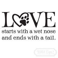 Image result for happiness starts with a wet nose and ends with a tail