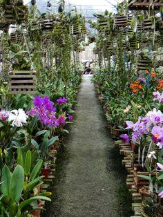 Hasil gambar untuk como fazer um orquidario no quintal Orchids Garden, Orchid Plants, Air Plants, Garden Nursery, Plant Nursery, Growing Orchids, Growing Flowers, Side Garden, Garden Art