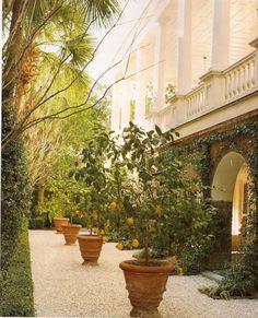 Mediterranean Garden Design, Haus Am See, European Garden, Villa, Citrus Trees, Orange Trees, Lemon Tree Potted, Lime Trees, Spring Garden