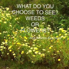 How often do we choose what we see to find the beauty or the lack of beauty on a person or situation? #inspirationalquote #inspirationalquestions #perspective by anahomelifediy