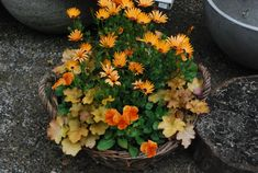 spring-container-planting.jpg