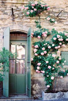climbing roses // france