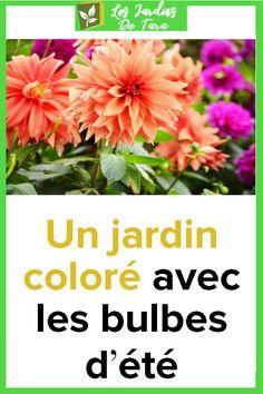 Un jardin coloré avec les bulbes d'été Plants