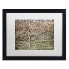 "Trademark Art Birch by Cora Niele Framed Photographic Print Size: 16"" H x 20"" W x 0.5"" D, Frame Color: Silver"