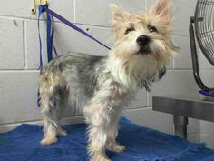 #A473868 Release date 10/11 Female, 2 years http://www.petharbor.com/pet.asp?uaid=SBCT.A473868 ... City of San Bernardino Animal Control-Shelter. https://www.facebook.com/photo.php?fbid=10203671030033861&set=a.10203202186593068&type=3&theater