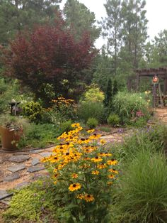 Garden Guerilla Ligstoel.13 Best Garden Images Seeds Planting Flowers Sutton Seeds