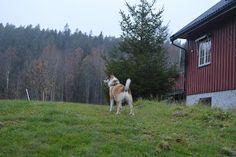 Gårdstunet Hundepensjonat: Herlig start på helgen med flotte hunder på tunet!...