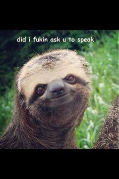 Sloth face!