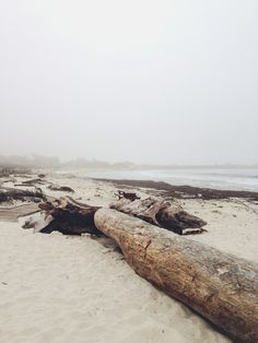 Looks like the west coast beaches where I grew up. Outlander, Nature Sauvage, In Natura, The Beach, Am Meer, Driftwood, The Great Outdoors, Wilderness, Sea Shells