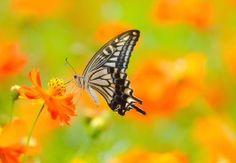 Butterfly most beautiful full HD wide wallpapers - New hd wallpaper