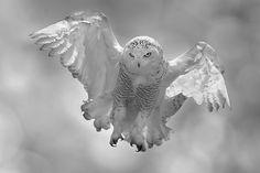 I want to fly by Stefano Ronchi #ave #bird #oiseau