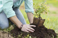 Apoios ao investimento na exploração por jovens agricultores pode ser feita até 10 de julho - A entidade gestora do PDR 2020 prorrogou o prazo da apresentação das candidaturas para investimentos na exploração agrícola, por jovens agricultores, para o dia 10 de julho, até às 17 horas.