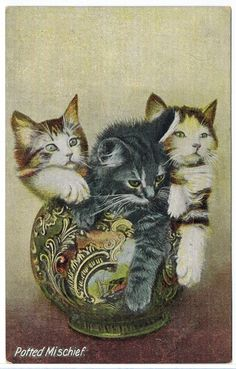 Antique Old Real Photo Cat Postcard [ww.oldpostcardsintime.com , Online source for old and antique postcards