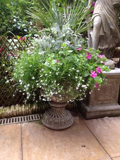 Urn from seed most plants