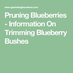 Pruning Blueberries - Information On Trimming Blueberry Bushes Blueberry Plant, Blueberry Bushes, Organic Blueberries, Homesteading, Gardens, Fruit, Healthy, Plants, Outdoor Gardens