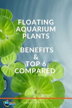 Benefits And Top 6 Compared Floating Aquarium Plants. Learn the benefits and make your fish tank more interesting. Benefits And Top 6 Compared Floating Aquarium Plants. Learn the benefits and make your fish tank more interesting. Freshwater Aquarium Plants, Tropical Fish Aquarium, Saltwater Aquarium, Aquarium Fish Tank, Planted Aquarium, Aquarium Sump, Diy Aquarium, Aquarium Ideas, Aquarium Design