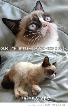 HAH! My favorite thing about grumpy cat is that her real name is Tardersauce and they call her Tard for short. XD