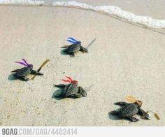 <3 Ninja Turtles <3