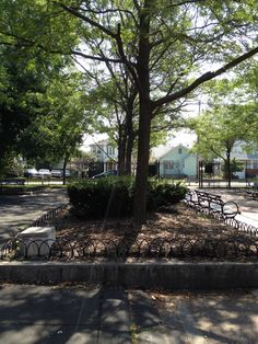 Trees make any playground better. This is at Laurelton