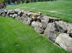 Basalt rock boulder retaining wall or can be built for a planter bed