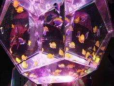 Art Aquarium a Milano dal 29 maggio al 23 agosto 2015 | Orari, Biglietti Informazioni Eventi a Milano