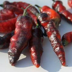 Chili Mojo Blackie (10+) (Samen)  Capsicum chinense Eindrucksvolle Chilisorte: die roten Früchte sind schwarz überzogen! Die Fruchtgröße beträgt 6cm in der Länge und 1cm in der Breite. Die Pflanze wirkt sehr dunkel: Die Blätter sind dunkelgrün mit schwarzem Anteil, die Stiele ebenfalls scharz, dazu noch unreife Früchte, die noch komplett schwarz durchgefärbt sind.