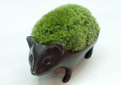 Hedgehog made by moss.