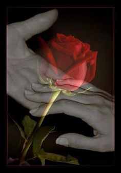 The undecipherable touch and transparent red rose of love . Beautiful Gif, Beautiful Roses, Love Images, Images Gif, Romantic Pictures, Beautiful Pictures, Night Pictures, Just Love, True Love