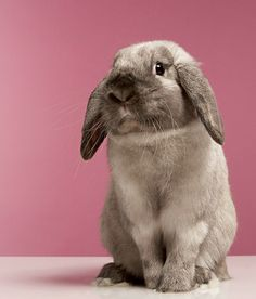 "Here's a rabbit who's distressed about the fact that people at work don't ""get"" your sense of humor."
