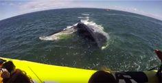 Video: Bringt der Wal das Boot zum Kentern? #News #Unterhaltung