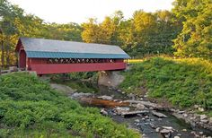 """BRATTLEBORO, VT is on corner of three states with vibrant arts and literary culture.  One of the most interesting events there is the annual """"Running with the Heifers"""""""