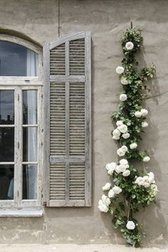 Climbing Roses on House Ideas. These beautiful roses can either bloom clusters of roses on its stem or large, single flowers. Country Shutters, Rose House, House 2, Rose Varieties, French Country House, Country Life, French Farmhouse, White Gardens, White Roses