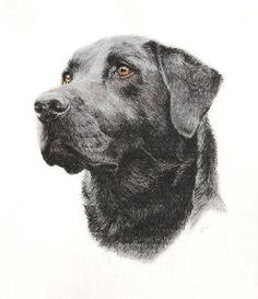 Pet portraits and people portraits gallery