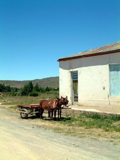 Joe de Villiers Designs Karoo Vernacular Influences Western cape RSA Cute Donkey, Velvet Sky, Smell Of Rain, Vernacular Architecture, Out Of Africa, African History, Zebras, South Africa, Beautiful Places