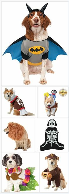25c4e01a44 75 Best Pet Halloween Costumes images in 2018   Animal costumes ...