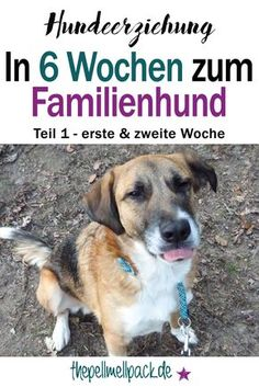 "In 6 Wochen zum Familienhund? – Teil 1 unserer Hundeerziehung Dog Training – The part of our journey ""In 6 weeks to the family dog"" – Dog Training Best Dogs For Families, Family Dogs, Education Positive, Positive Verstärkung, Pet Dogs, Dogs And Puppies, Doggies, Dog Hacks, Dog Quotes"